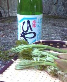 清酒HOYO-hiyato
